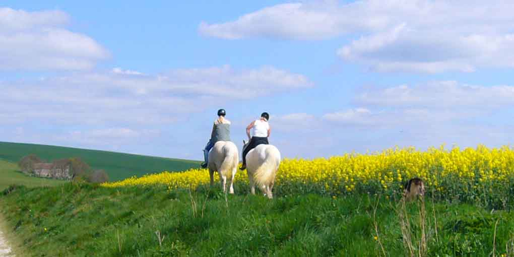consideer horseback riding to meet singles over 50