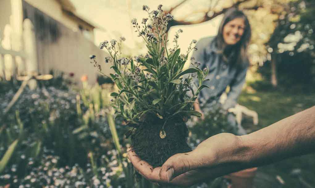 join a garden club to meet potential dates